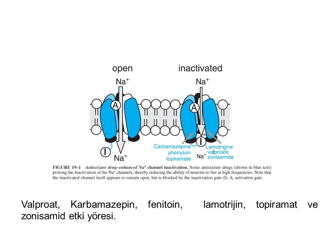 Valproat, Karbamazepin, fenitoin, lamotrijin, topiramat ve zonisamid etki yöresi.
