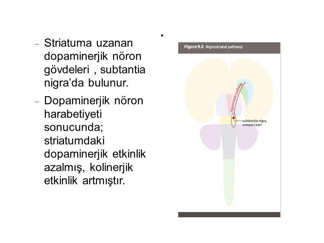  Striatuma uzanan dopaminerjik nöron gövdeleri, subtantia nigra'da bulunur.