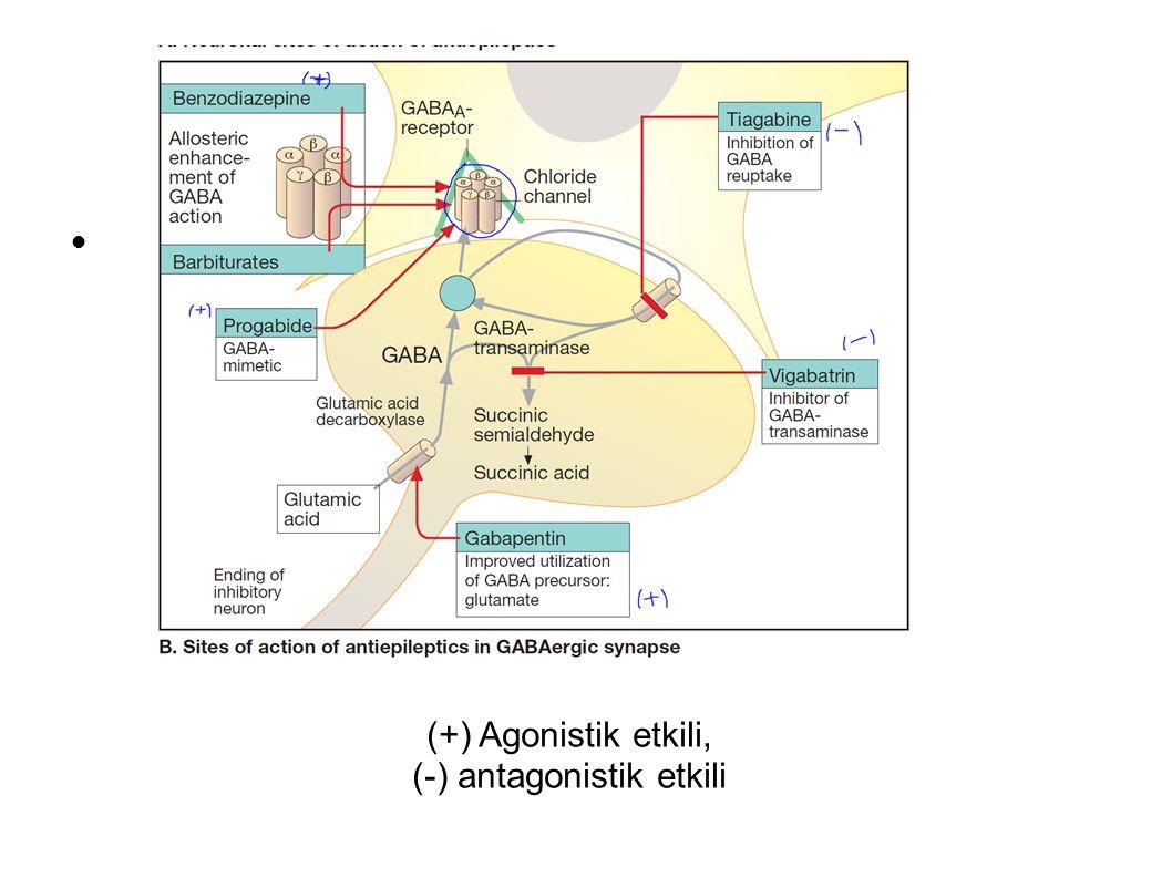 (+) Agonistik etkili, (-) antagonistik etkili.