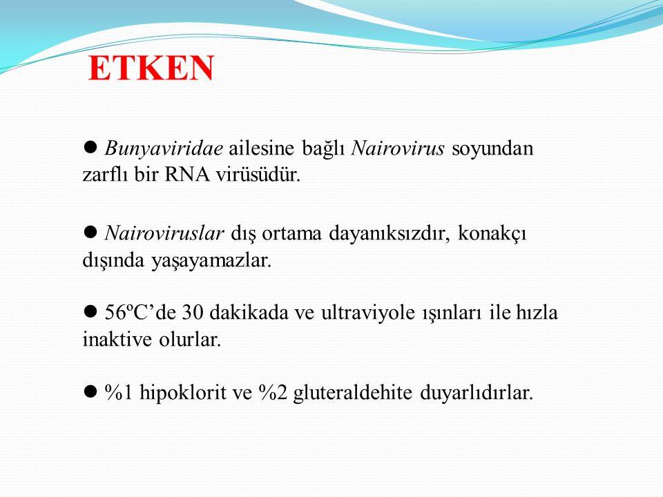 ETKEN Bunyaviridae ailesine bağlı Nairovirus soyundan zarflı bir RNA virüsüdür. Nairoviruslar dış ortama dayanıksızdır, konakçı dışında yaşayamazlar.