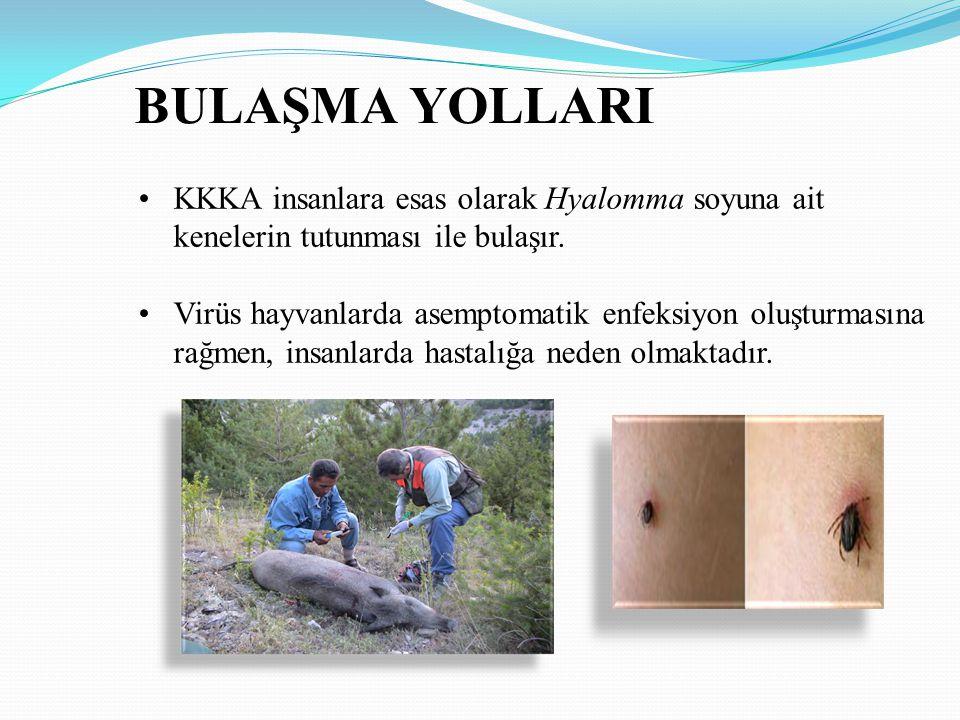 BULAŞMA YOLLARI 1.Enfekte kene tutunması 2. Enfekte kenelerin çıplak el ile ezilmesi 3.