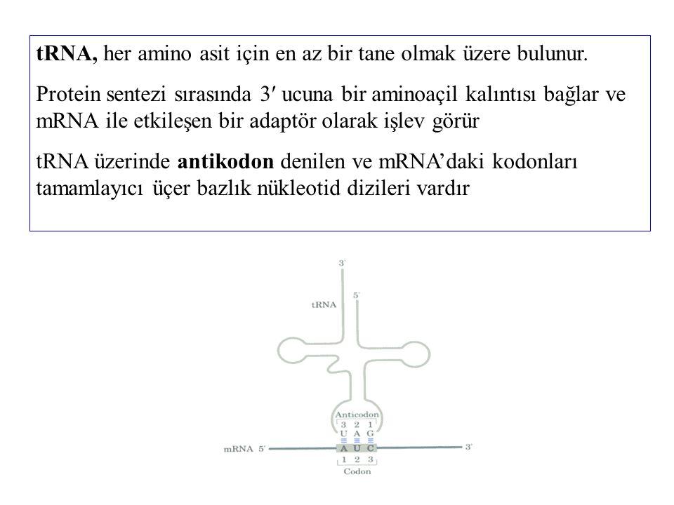 tRNA, her amino asit için en az bir tane olmak üzere bulunur. Protein sentezi sırasında 3 ucuna bir aminoaçil kalıntısı bağlar ve mRNA ile etkileşen b