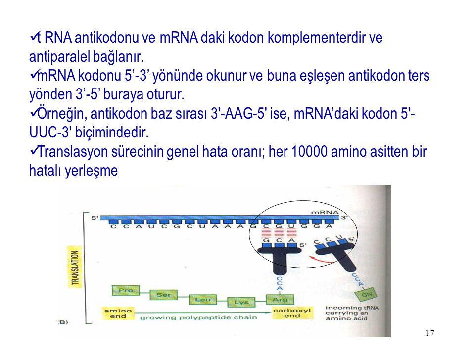 17 t RNA antikodonu ve mRNA daki kodon komplementerdir ve antiparalel bağlanır. mRNA kodonu 5'-3' yönünde okunur ve buna eşleşen antikodon ters yönden