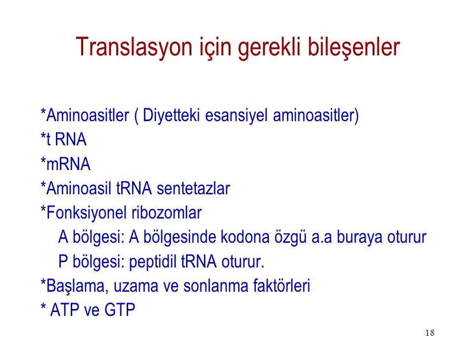 18 Translasyon için gerekli bileşenler *Aminoasitler ( Diyetteki esansiyel aminoasitler) *t RNA *mRNA *Aminoasil tRNA sentetazlar *Fonksiyonel ribozom