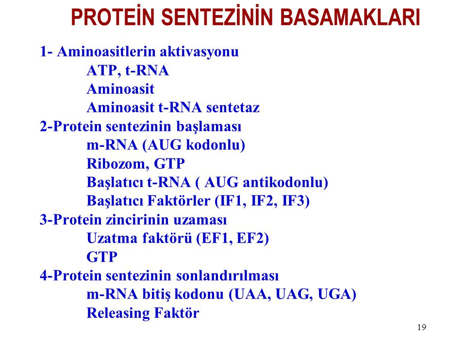 19 PROTEİN SENTEZİNİN BASAMAKLARI 1- Aminoasitlerin aktivasyonu ATP, t-RNA Aminoasit Aminoasit t-RNA sentetaz 2-Protein sentezinin başlaması m-RNA (AU