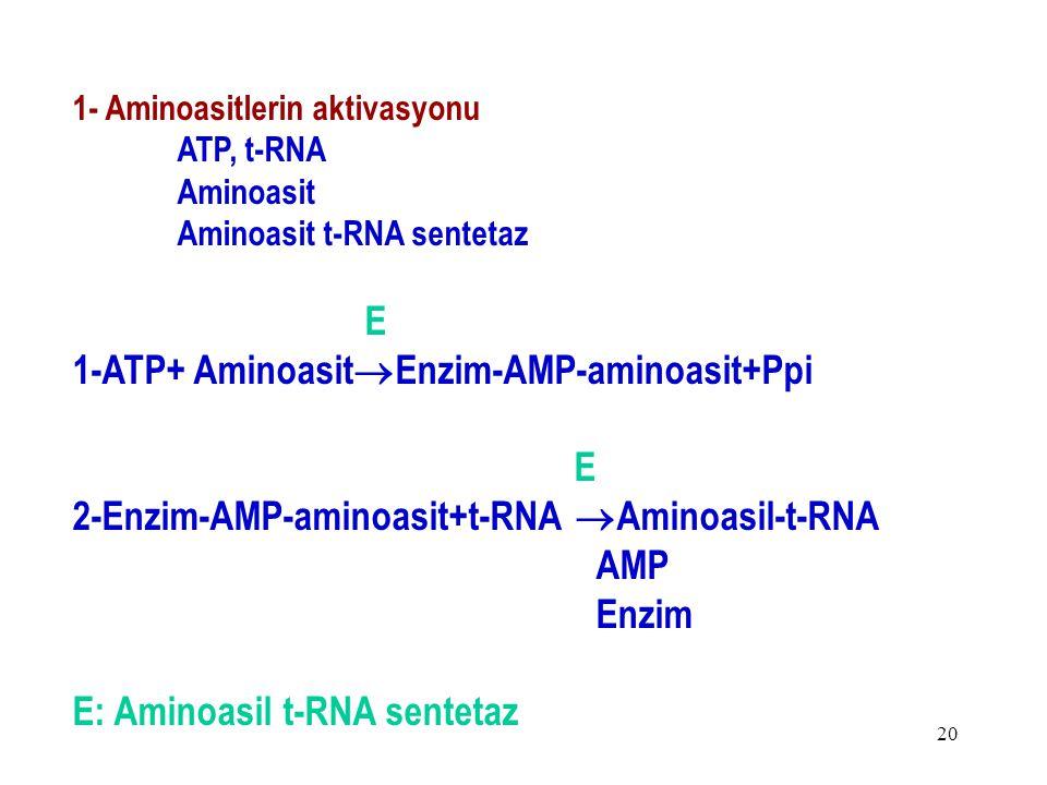 20 1- Aminoasitlerin aktivasyonu ATP, t-RNA Aminoasit Aminoasit t-RNA sentetaz E 1-ATP+ Aminoasit  Enzim-AMP-aminoasit+Ppi E 2-Enzim-AMP-aminoasit+t-