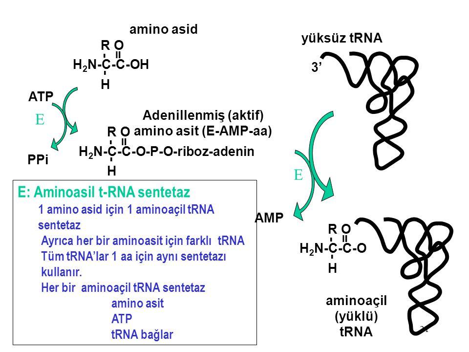 21 H 2 N-C-C-OH H R - - O = ATP H 2 N-C-C-O-P-O-riboz-adenin H R - - O = amino asid Adenillenmiş (aktif) amino asit (E-AMP-aa) PPi yüksüz tRNA H 2 N-C