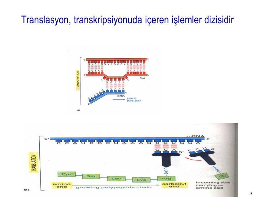 3 Translasyon, transkripsiyonuda içeren işlemler dizisidir