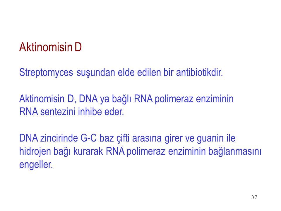 37 Aktinomisin D Streptomyces suşundan elde edilen bir antibiotikdir. Aktinomisin D, DNA ya bağlı RNA polimeraz enziminin RNA sentezini inhibe eder. D