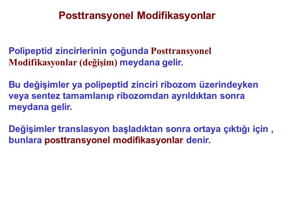Posttransyonel Modifikasyonlar Polipeptid zincirlerinin çoğunda Posttransyonel Modifikasyonlar (değişim) meydana gelir. Bu değişimler ya polipeptid zi