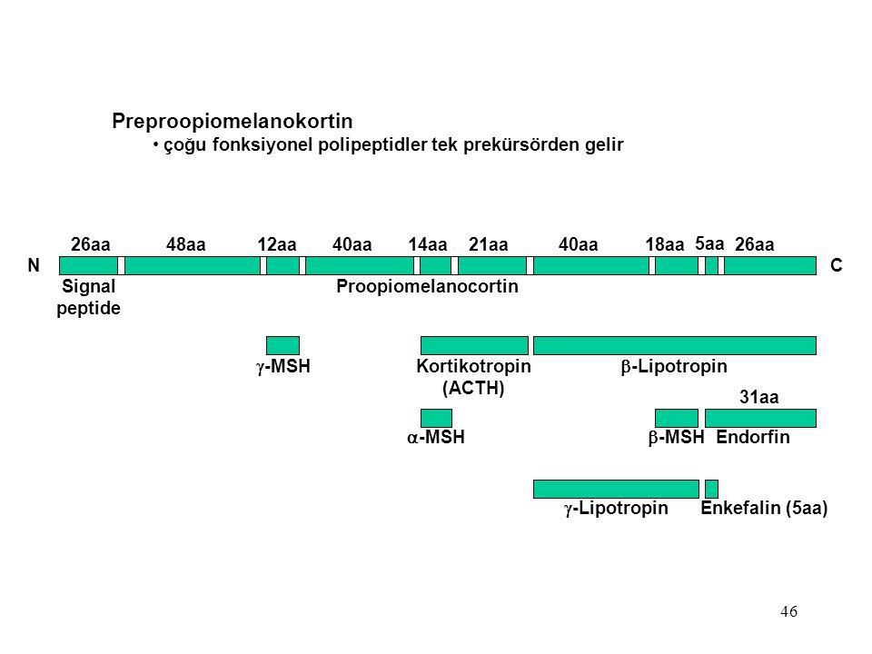 46 Preproopiomelanokortin çoğu fonksiyonel polipeptidler tek prekürsörden gelir 26aa 48aa 12aa 40aa 14aa 21aa 40aa 18aa 26aa N C Signal peptide Proopi