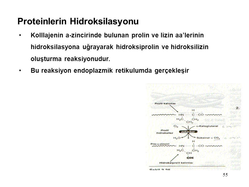 55 Proteinlerin Hidroksilasyonu Kolllajenin a-zincirinde bulunan prolin ve lizin aa'lerinin hidroksilasyona uğrayarak hidroksiprolin ve hidroksilizin