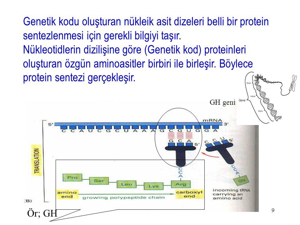 9 Genetik kodu oluşturan nükleik asit dizeleri belli bir protein sentezlenmesi için gerekli bilgiyi taşır. Nükleotidlerin dizilişine göre (Genetik kod