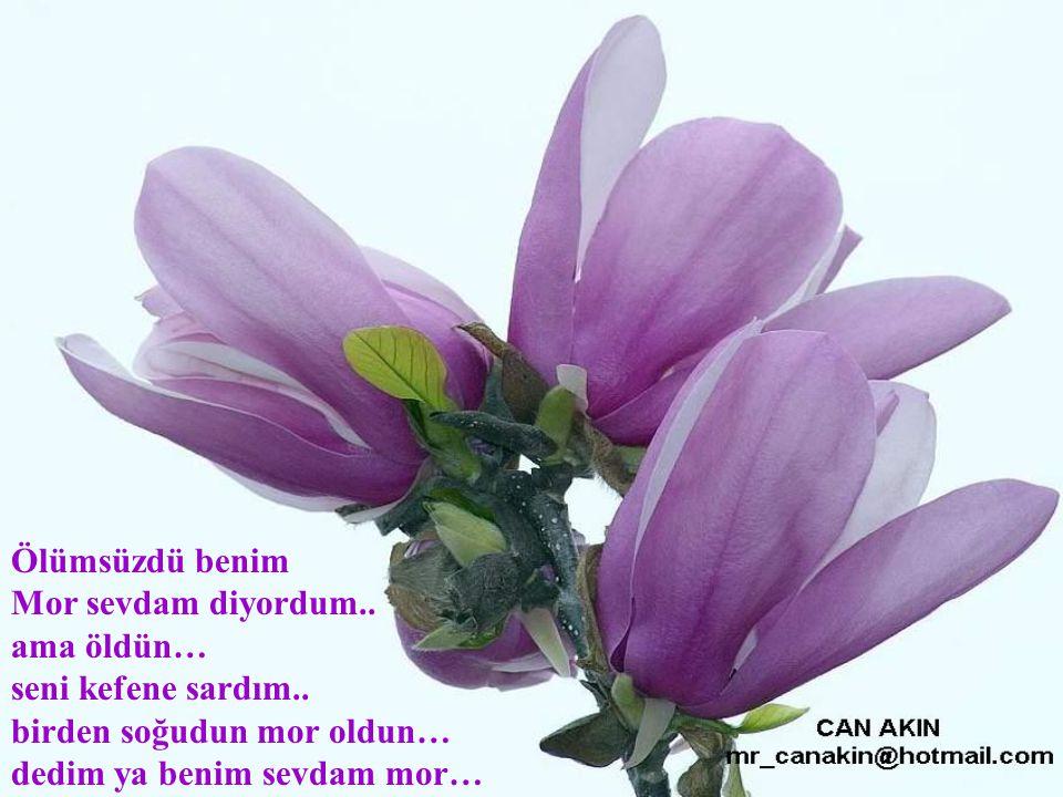 Koşalım mor çiçeklerle dolu Mor sevda bahçelerinde..