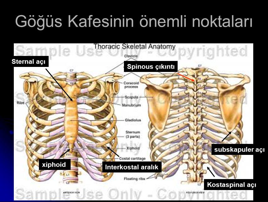 Sternal açı subskapuler açı Interkostal aralık Spinous çıkıntı xiphoid Kostaspinal açı Göğüs Kafesinin önemli noktaları