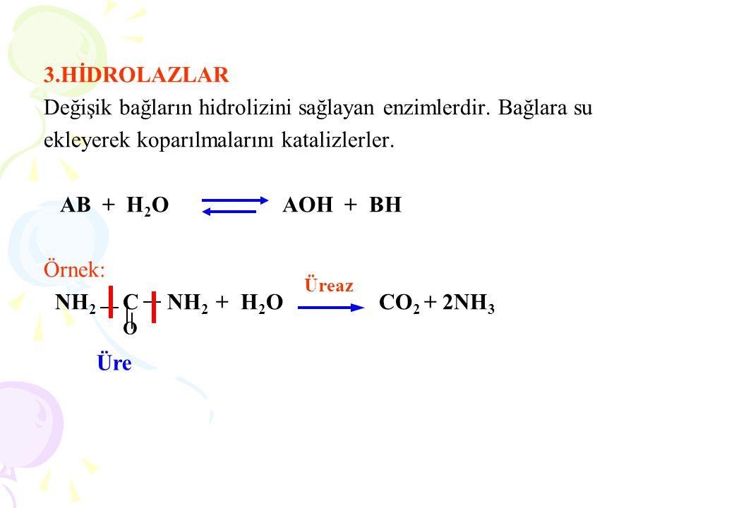 3.HİDROLAZLAR Değişik bağların hidrolizini sağlayan enzimlerdir. Bağlara su ekleyerek koparılmalarını katalizlerler. AB + H 2 O AOH + BH Örnek: NH 2 C