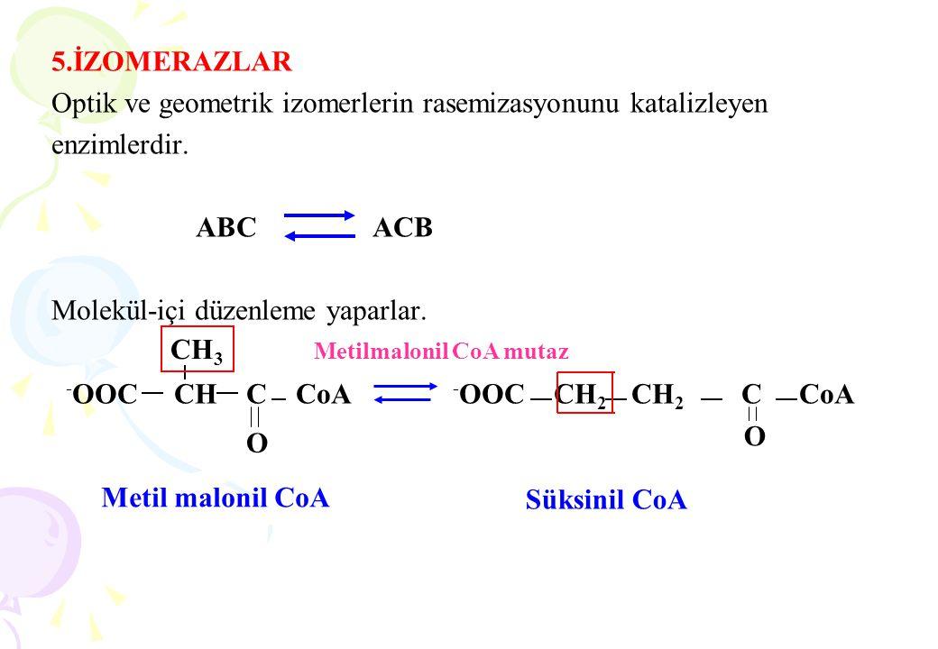 5.İZOMERAZLAR Optik ve geometrik izomerlerin rasemizasyonunu katalizleyen enzimlerdir. ABC ACB Molekül-içi düzenleme yaparlar. - OOC CH C CoA - OOC CH