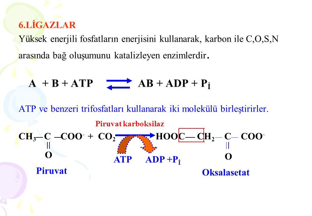 6.LİGAZLAR Yüksek enerjili fosfatların enerjisini kullanarak, karbon ile C,O,S,N arasında bağ oluşumunu katalizleyen enzimlerdir. A + B + ATP AB + ADP