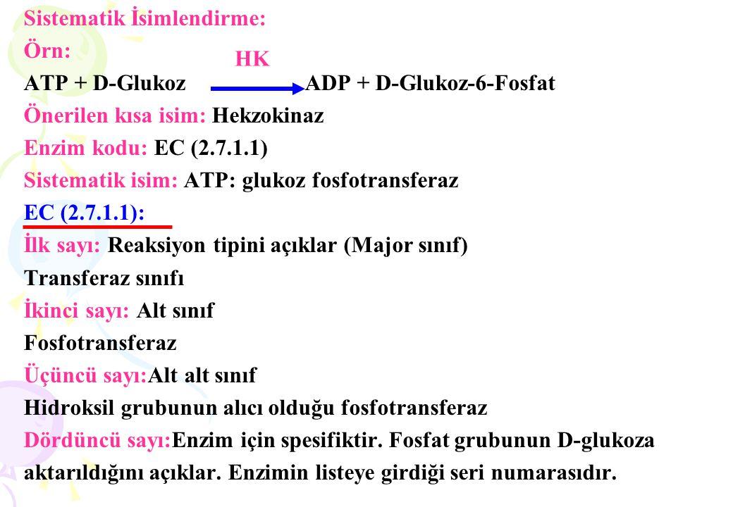 Sistematik İsimlendirme: Örn: ATP + D-Glukoz ADP + D-Glukoz-6-Fosfat Önerilen kısa isim: Hekzokinaz Enzim kodu: EC (2.7.1.1) Sistematik isim: ATP: glu