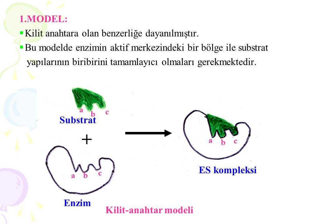 1.MODEL:  Kilit anahtara olan benzerliğe dayanılmıştır.  Bu modelde enzimin aktif merkezindeki bir bölge ile substrat yapılarının biribirini tamamla