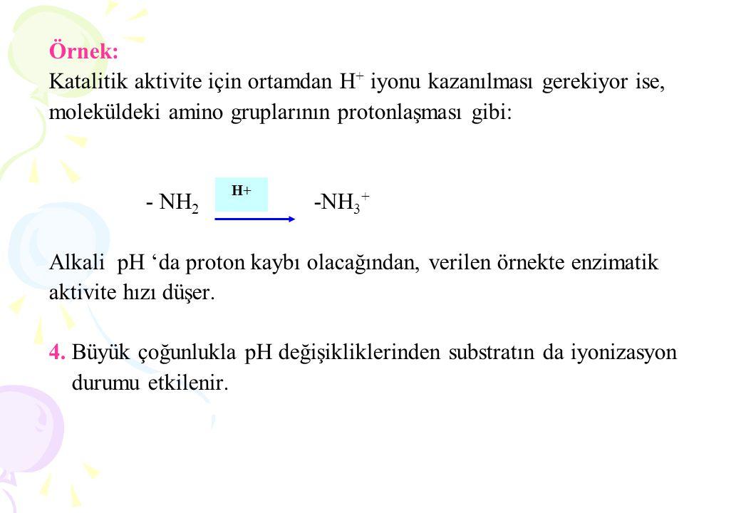 Örnek: Katalitik aktivite için ortamdan H + iyonu kazanılması gerekiyor ise, moleküldeki amino gruplarının protonlaşması gibi: - NH 2 -NH 3 + Alkali p