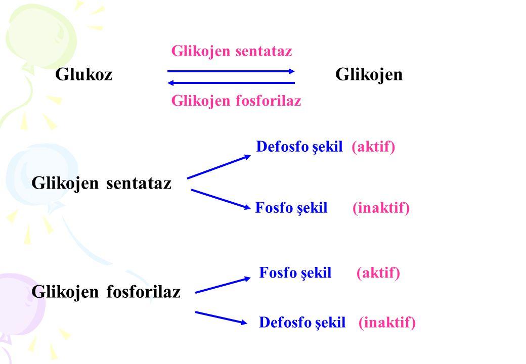 Glukoz Glikojen Glikojen sentataz Glikojen fosforilaz Glikojen sentataz Glikojen fosforilaz Defosfo şekil (aktif) Fosfo şekil (inaktif) Fosfo şekil (a