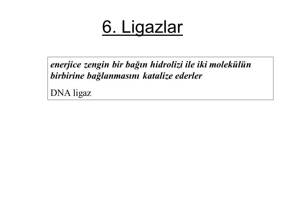 6. Ligazlar enerjice zengin bir bağın hidrolizi ile iki molekülün birbirine bağlanmasını katalize ederler DNA ligaz