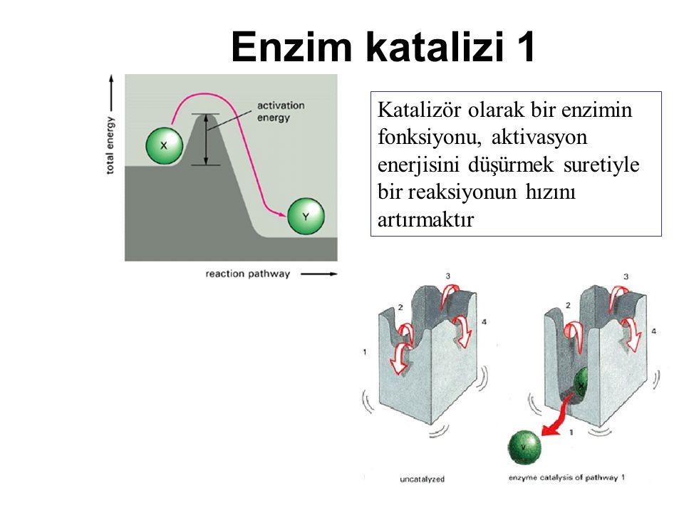 Enzim katalizi 1 Katalizör olarak bir enzimin fonksiyonu, aktivasyon enerjisini düşürmek suretiyle bir reaksiyonun hızını artırmaktır