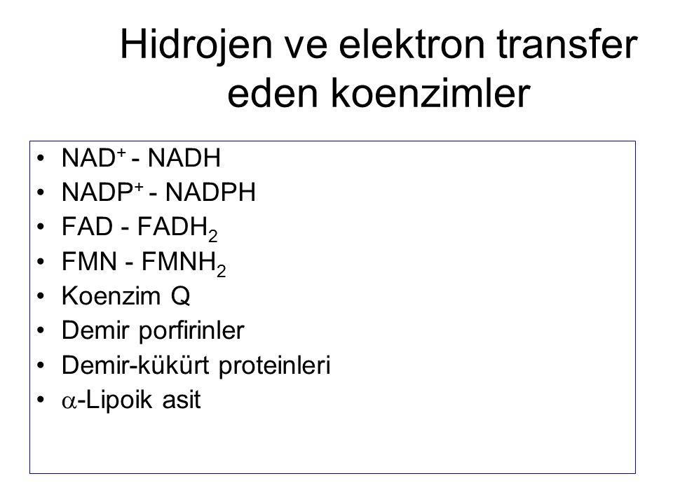 NAD + - NADH NADP + - NADPH FAD - FADH 2 FMN - FMNH 2 Koenzim Q Demir porfirinler Demir-kükürt proteinleri  -Lipoik asit Hidrojen ve elektron transfe