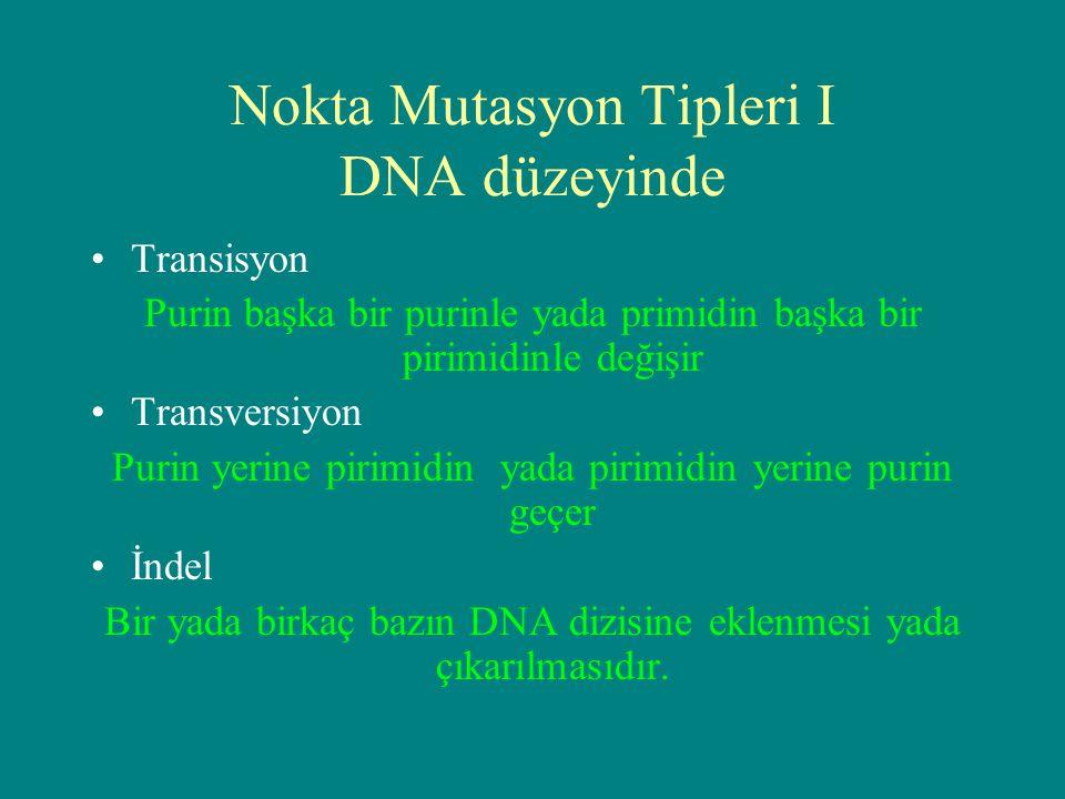 Nokta Mutasyon Tipleri I DNA düzeyinde Transisyon Purin başka bir purinle yada primidin başka bir pirimidinle değişir Transversiyon Purin yerine pirim