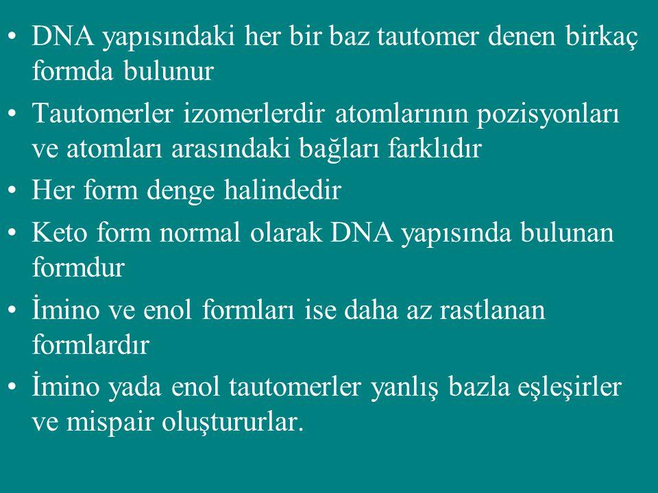 DNA yapısındaki her bir baz tautomer denen birkaç formda bulunur Tautomerler izomerlerdir atomlarının pozisyonları ve atomları arasındaki bağları fark