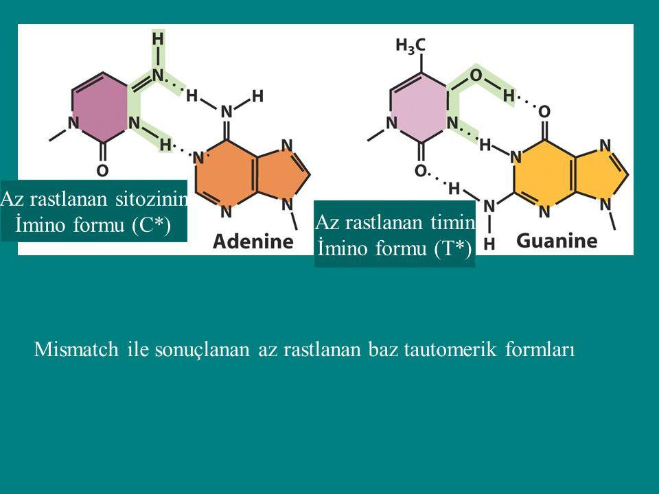 Az rastlanan sitozinin İmino formu (C*) Az rastlanan timin İmino formu (T*) Mismatch ile sonuçlanan az rastlanan baz tautomerik formları