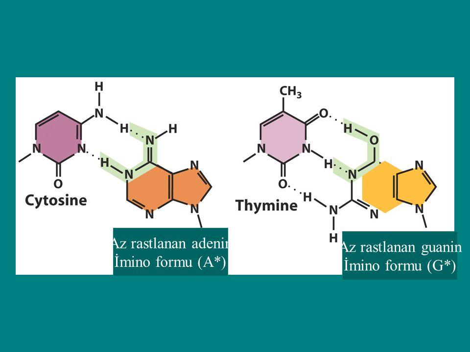 Az rastlanan adenin İmino formu (A*) Az rastlanan guanin İmino formu (G*)