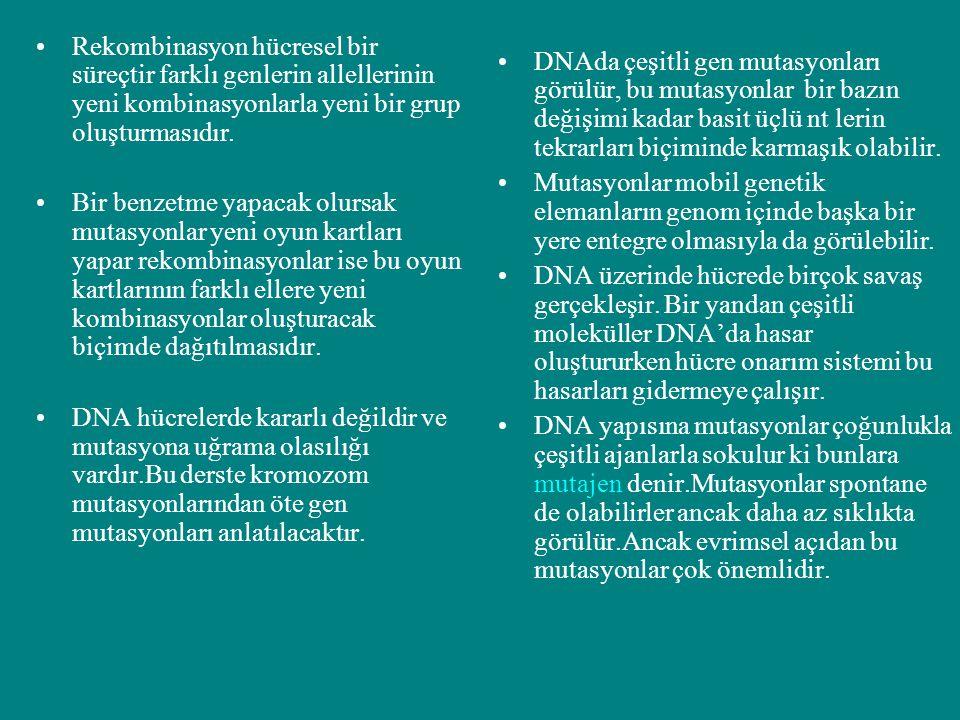 Rekombinasyon hücresel bir süreçtir farklı genlerin allellerinin yeni kombinasyonlarla yeni bir grup oluşturmasıdır. Bir benzetme yapacak olursak muta