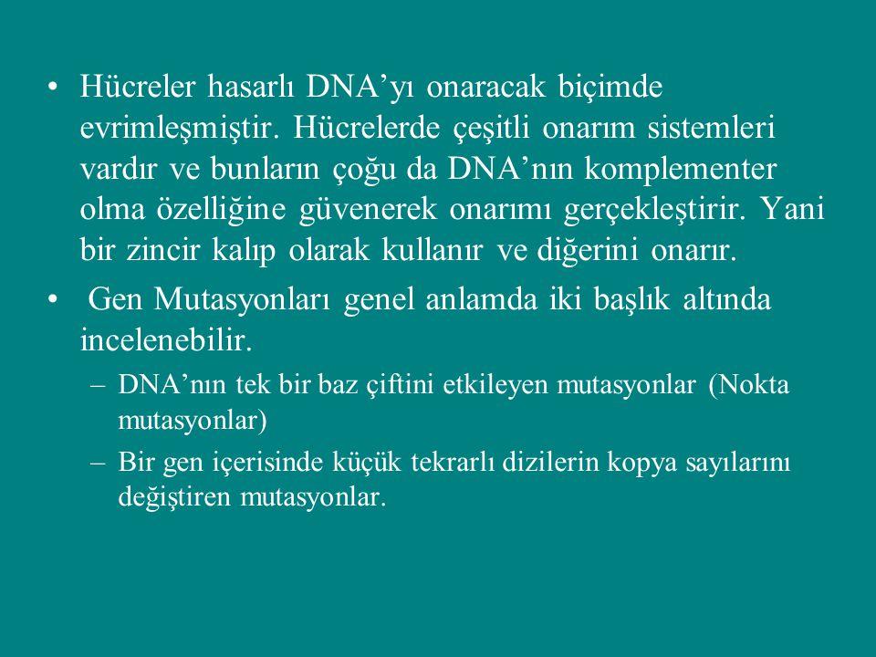 Spontan lezyonlar Doğal olarak DNAnın hasara uğramasına spontan lezyonlar denir ve bu hasarlar mutasyona neden olurlar En sık rastlananları –Depurinasyon (daha sık gözlenen) –deaminasyon
