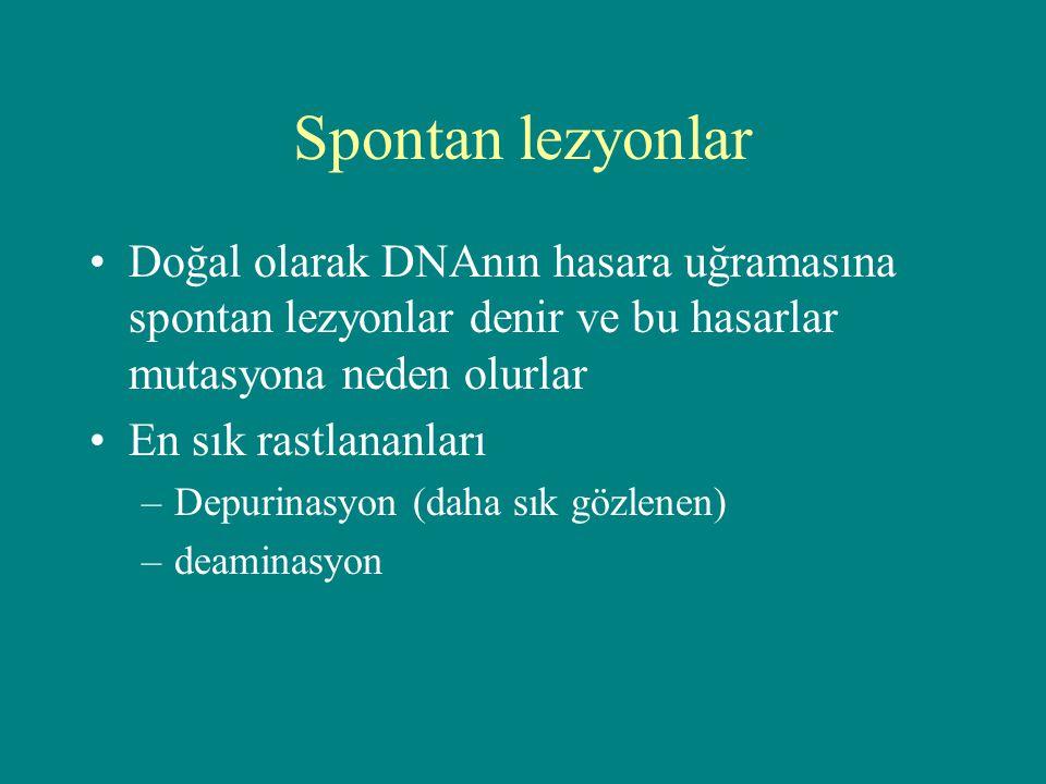 Spontan lezyonlar Doğal olarak DNAnın hasara uğramasına spontan lezyonlar denir ve bu hasarlar mutasyona neden olurlar En sık rastlananları –Depurinas