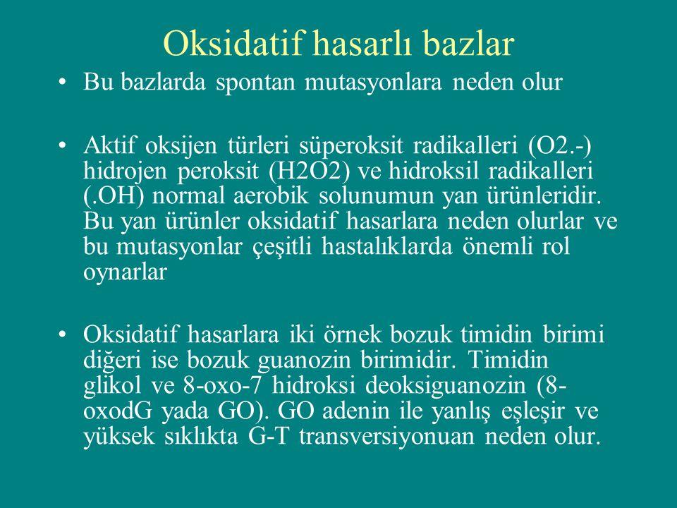 Oksidatif hasarlı bazlar Bu bazlarda spontan mutasyonlara neden olur Aktif oksijen türleri süperoksit radikalleri (O2.-) hidrojen peroksit (H2O2) ve h