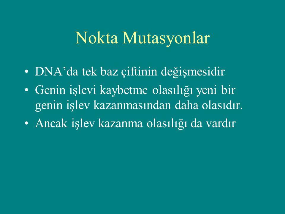Nokta Mutasyonlar DNA'da tek baz çiftinin değişmesidir Genin işlevi kaybetme olasılığı yeni bir genin işlev kazanmasından daha olasıdır. Ancak işlev k