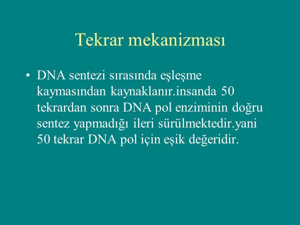 Tekrar mekanizması DNA sentezi sırasında eşleşme kaymasından kaynaklanır.insanda 50 tekrardan sonra DNA pol enziminin doğru sentez yapmadığı ileri sür