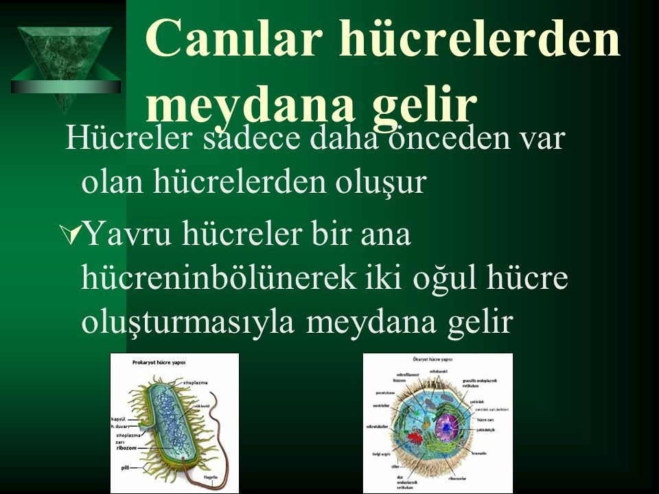 Canılar hücrelerden meydana gelir Hücreler sadece daha önceden var olan hücrelerden oluşur YYavru hücreler bir ana hücreninbölünerek iki oğul hücre