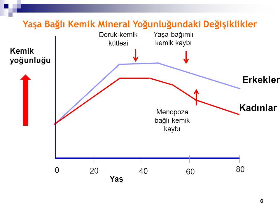 6 20 40 60 80 Erkekler Kadınlar Kemik yoğunluğu Doruk kemik kütlesi Yaşa bağımlı kemik kaybı Menopoza bağlı kemik kaybı Yaş Yaşa Bağlı Kemik Mineral Y