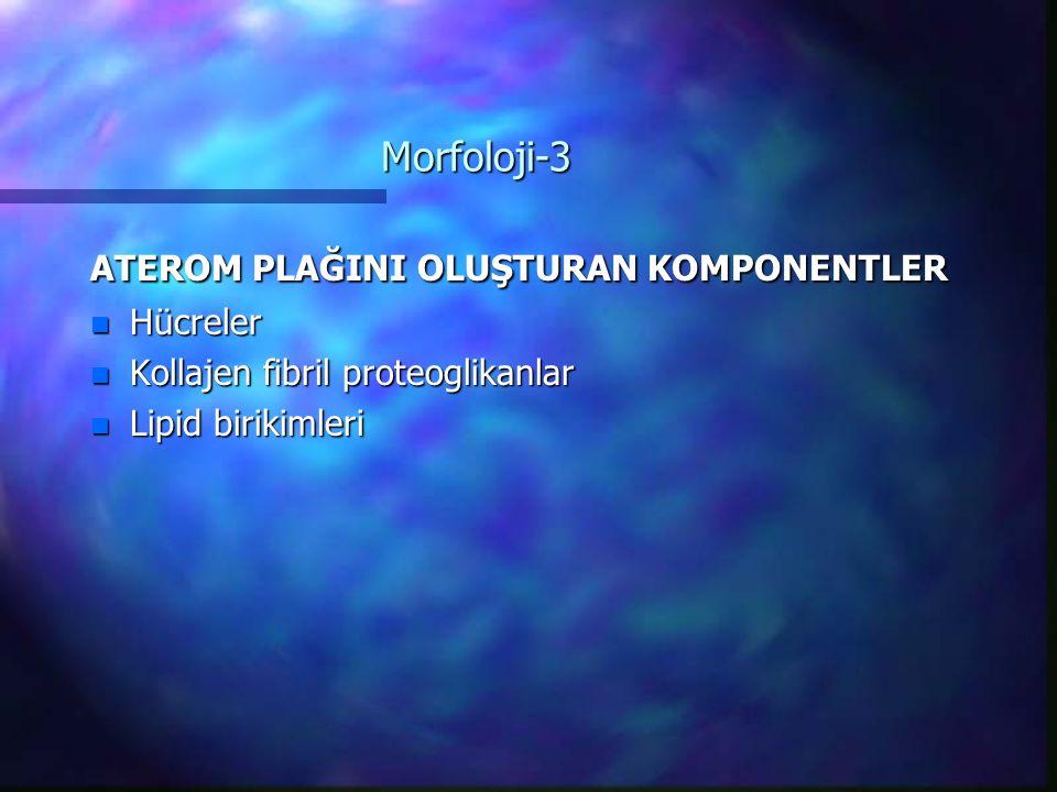 Morfoloji-3 ATEROM PLAĞINI OLUŞTURAN KOMPONENTLER n Hücreler n Kollajen fibril proteoglikanlar n Lipid birikimleri