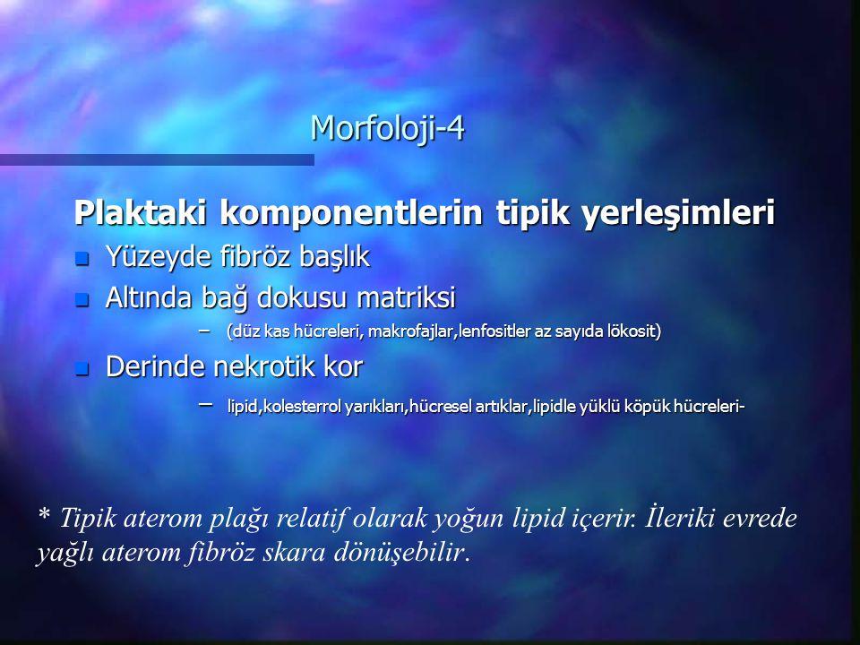 Morfoloji-4 Plaktaki komponentlerin tipik yerleşimleri n Yüzeyde fibröz başlık n Altında bağ dokusu matriksi – (düz kas hücreleri, makrofajlar,lenfositler az sayıda lökosit) n Derinde nekrotik kor – lipid,kolesterrol yarıkları,hücresel artıklar,lipidle yüklü köpük hücreleri- * Tipik aterom plağı relatif olarak yoğun lipid içerir.