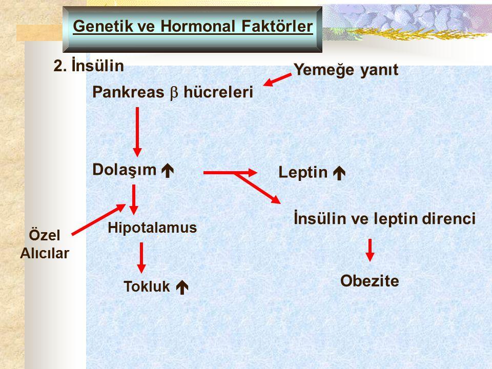 Genetik ve Hormonal Faktörler 2. İnsülin Pankreas  hücreleri Dolaşım  Yemeğe yanıt Leptin  Obezite Özel Alıcılar Hipotalamus İnsülin ve leptin dire