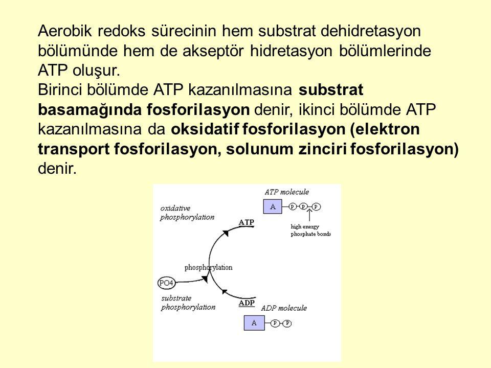 Aerobik redoks sürecinin hem substrat dehidretasyon bölümünde hem de akseptör hidretasyon bölümlerinde ATP oluşur. Birinci bölümde ATP kazanılmasına s