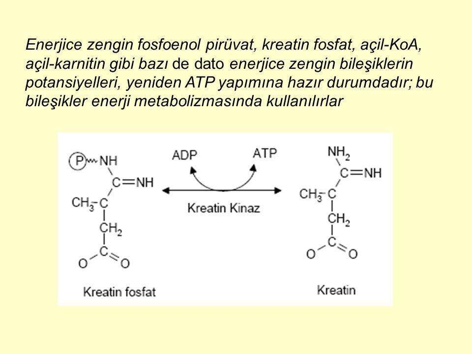 Enerjice zengin fosfoenol pirüvat, kreatin fosfat, açil-KoA, açil-karnitin gibi bazı de dato enerjice zengin bileşiklerin potansiyelleri, yeniden ATP
