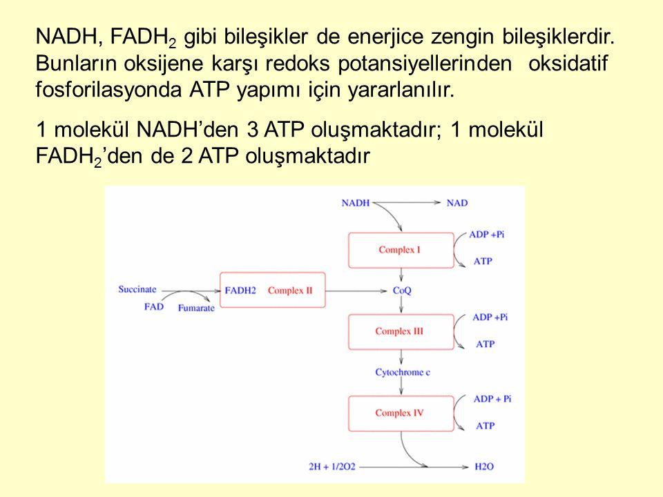 NADH, FADH 2 gibi bileşikler de enerjice zengin bileşiklerdir. Bunların oksijene karşı redoks potansiyellerinden oksidatif fosforilasyonda ATP yapımı