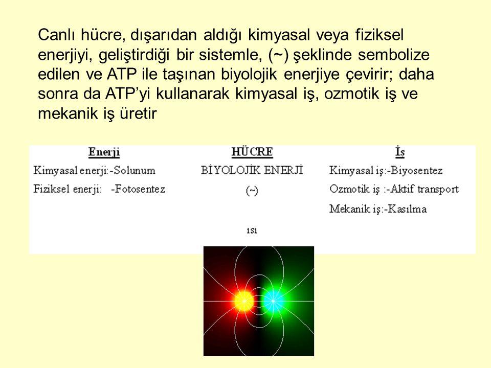 Canlı hücre, dışarıdan aldığı kimyasal veya fiziksel enerjiyi, geliştirdiği bir sistemle, (~) şeklinde sembolize edilen ve ATP ile taşınan biyolojik e