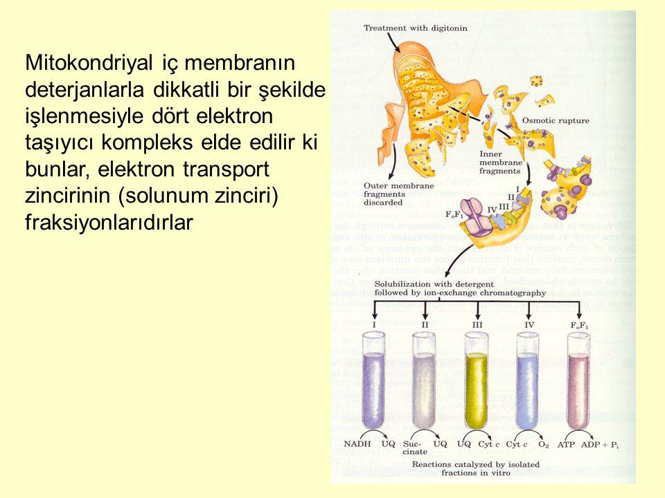 Mitokondriyal iç membranın deterjanlarla dikkatli bir şekilde işlenmesiyle dört elektron taşıyıcı kompleks elde edilir ki bunlar, elektron transport z