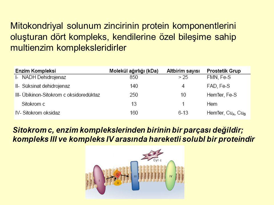 Mitokondriyal solunum zincirinin protein komponentlerini oluşturan dört kompleks, kendilerine özel bileşime sahip multienzim kompleksleridirler Sitokr